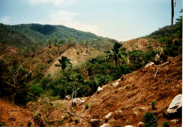 Mexico stripped hillsides