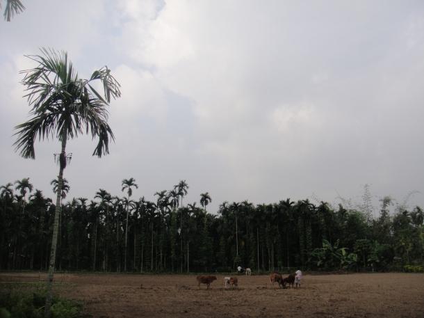 Bodo Liberation Tigers Force