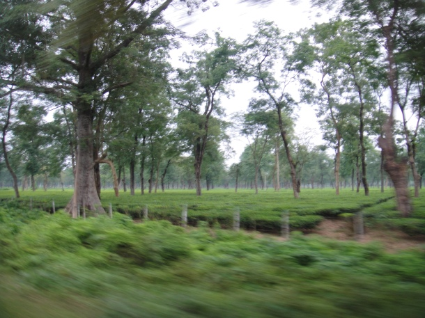 driving in assam