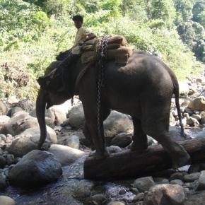 The Logging Camps Of ArunachalPradesh