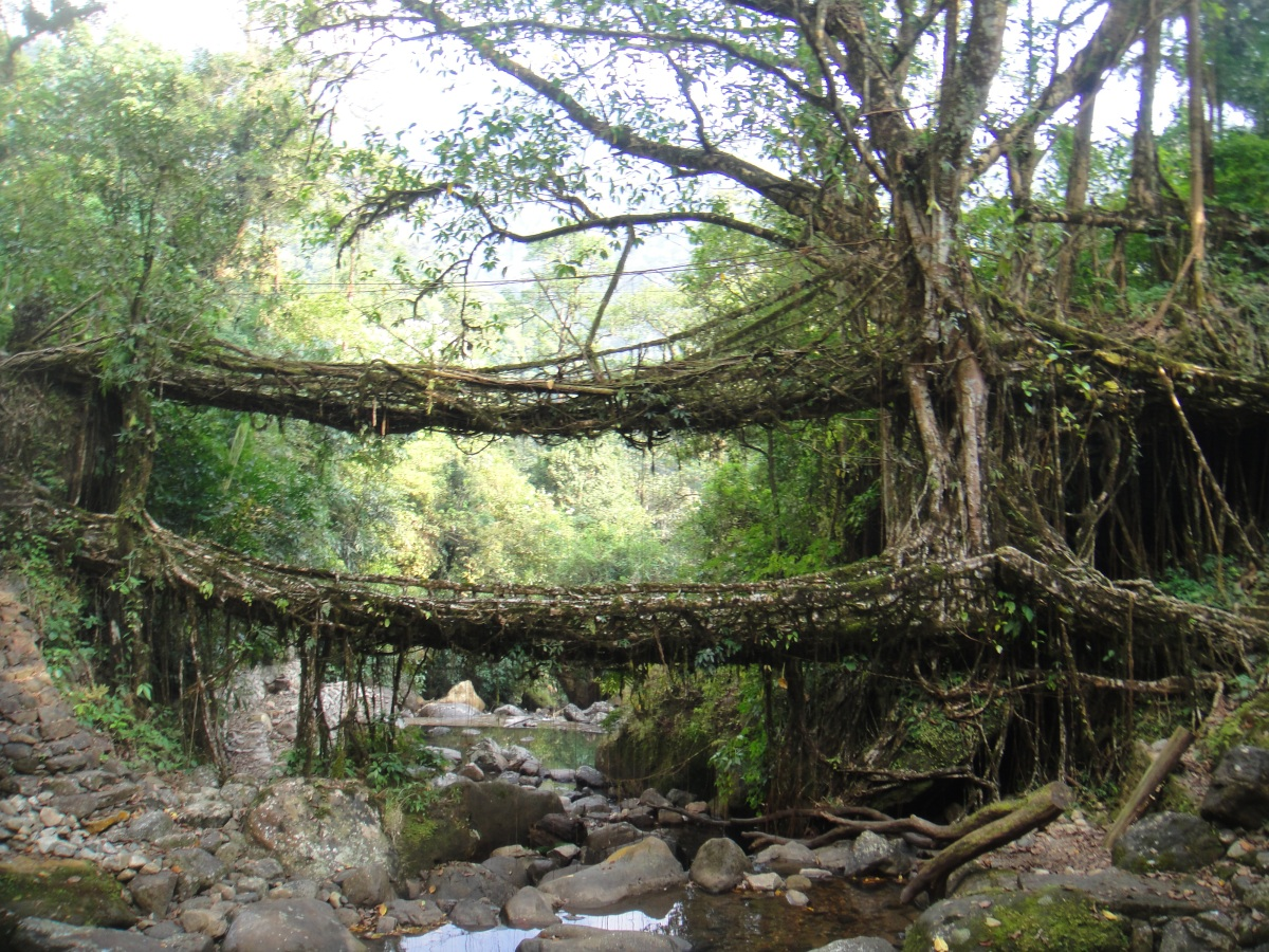 The Living Bridges Of Meghalaya The Velvet Rocket