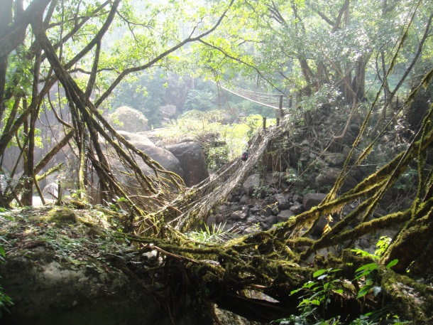 the living bridges of meghalaya