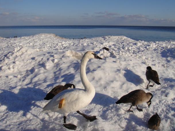 mississauga-lake-ontario