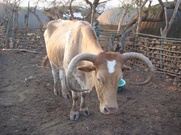village-zululand