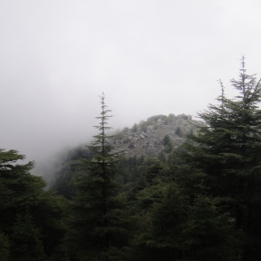 The Cedar Forests Of Lebanon