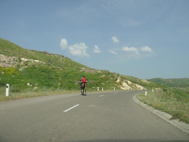 armenia horse
