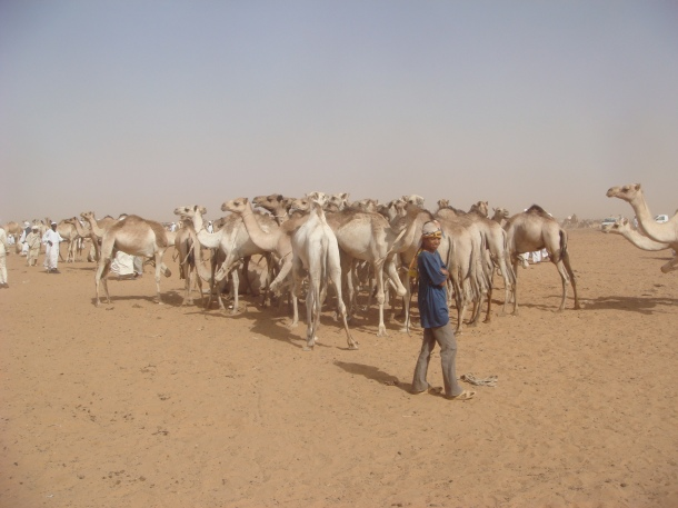camel-market-in-omdurman