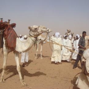 Sudan's Omdurman CamelMarket