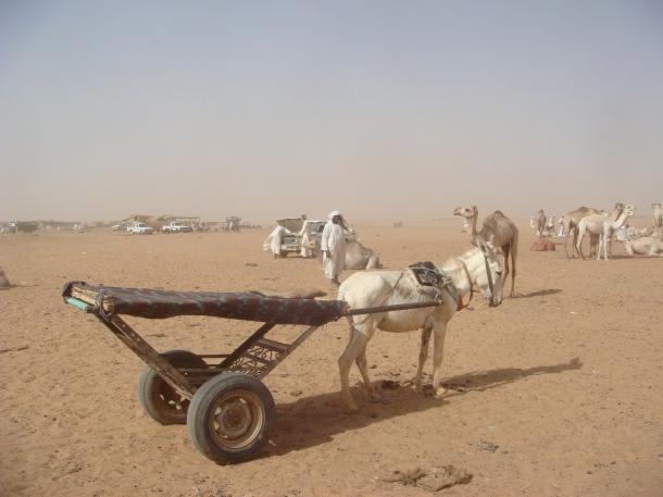 camel-market-omdurman-sudan