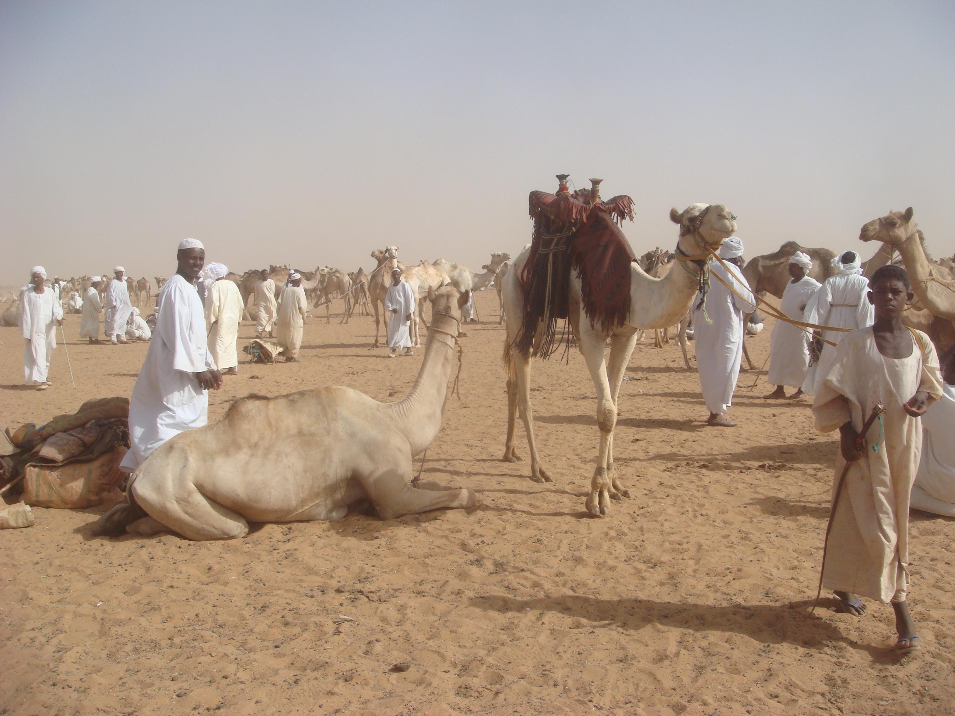 Sudan S Omdurman Camel Market The Velvet Rocket