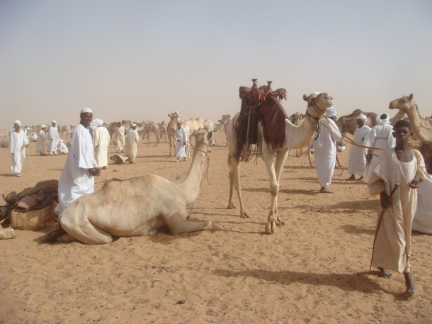 camel-market-sudan