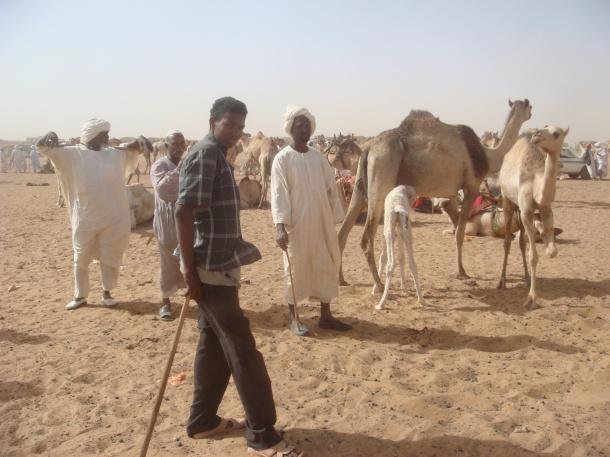 camel-market
