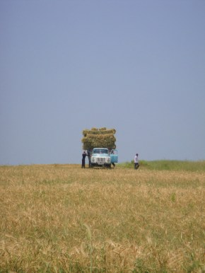 Photo Of The Day: Harvesting Hay In The Lachin Corridor