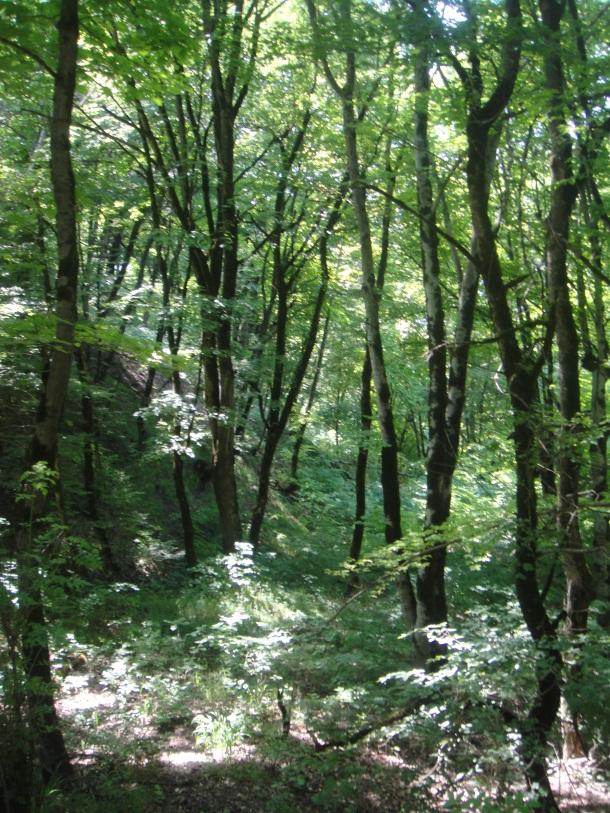 nagorno-karabakh forest