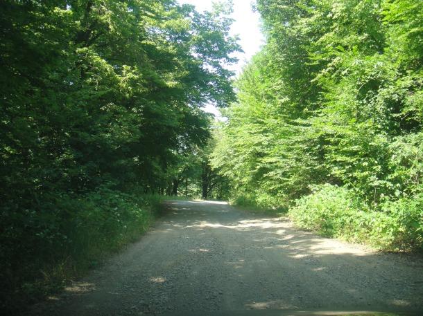 nagorno-karabakh landscape forest road