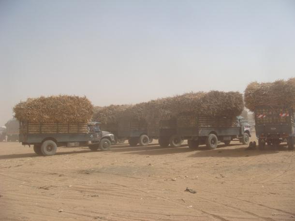 omdurman-camel-market