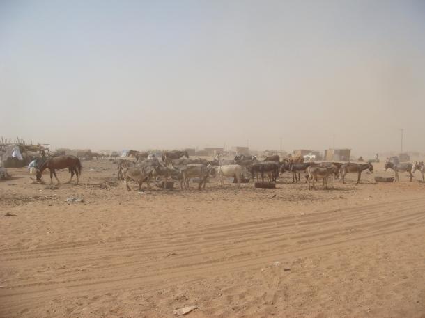 omdurman-livestock-market