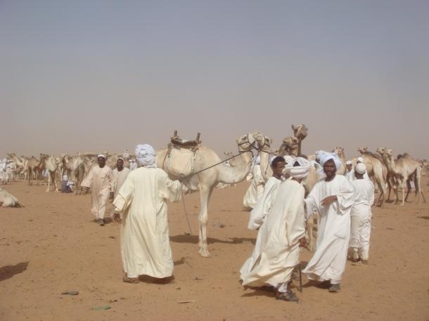 sudan-camel-market