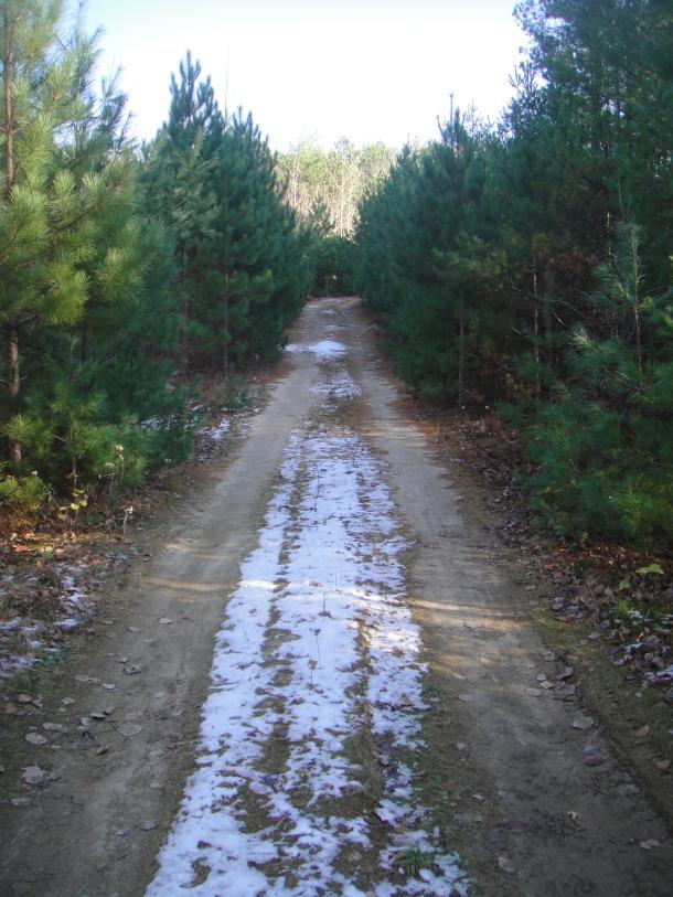 katahdin forest management