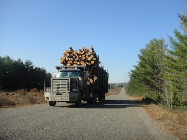 logging truck golden road