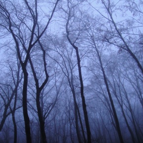 Photos Of The Day: A Misty, Frozen RomanianForest