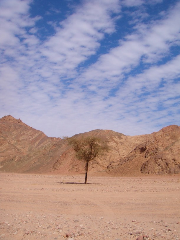 beautiful sinai desert