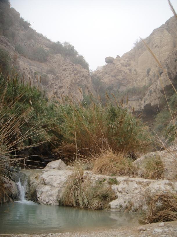 ein gedi nature reserve