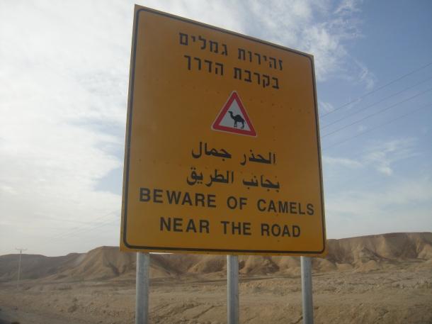 israeli road sign camels