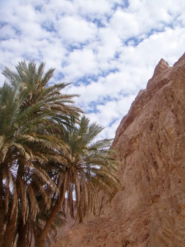 oasis sinai desert
