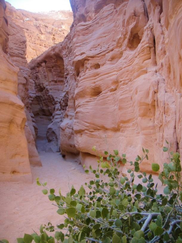 sinai desert canyon