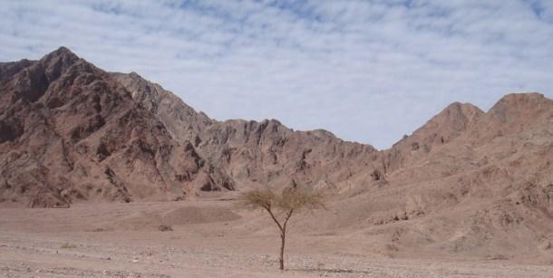 sinai peninsula egypt