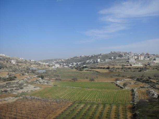 palestine farm