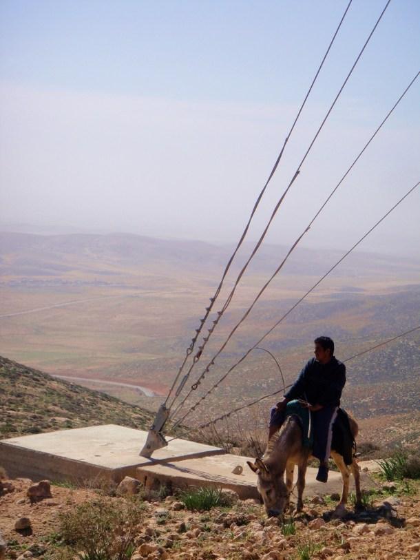 palestine goat herder