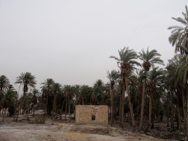 palestine palm grove