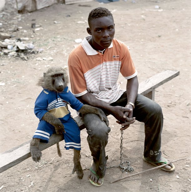 pieter hugo baboon