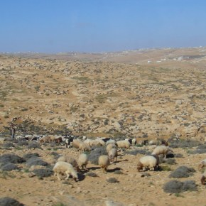 The Landscapes Of Palestine