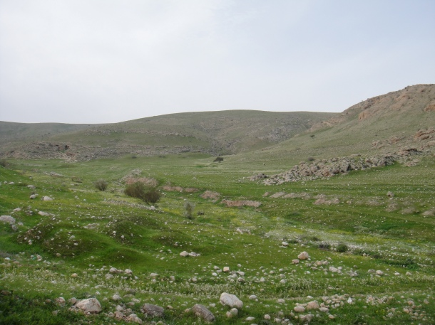 west bank landscapes
