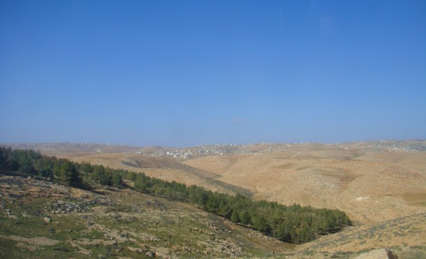 woods palestine