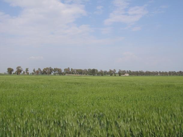 farm partisans italy