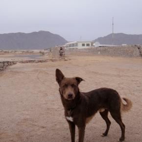 The Empty Sinai