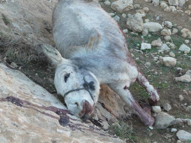 donkey killed by settlers