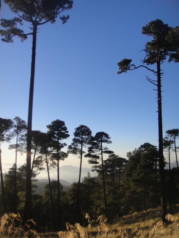 nevado-de-toluca-forest