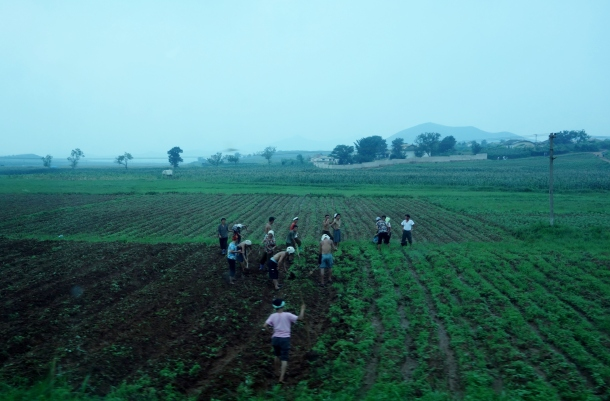 working-the-fields-north-korea