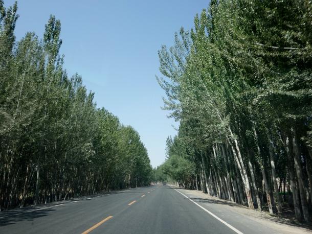 driving-in-xinjiang