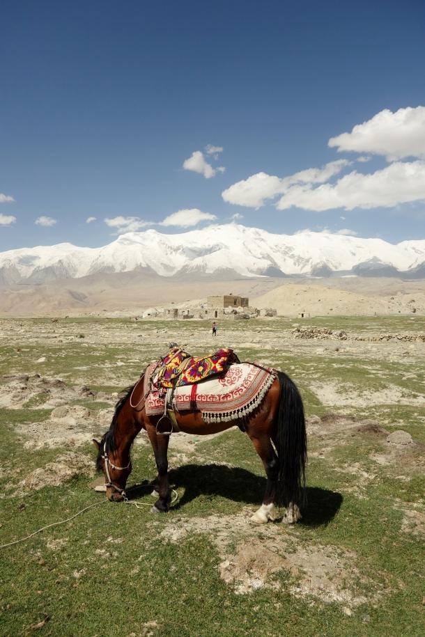 Kyrgyz-horse