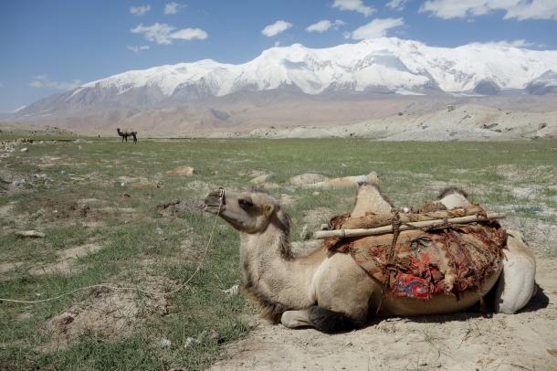 Kyrgyz-nomads-bactrian-camel