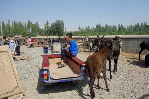 donkey-kashgar-livestock-market