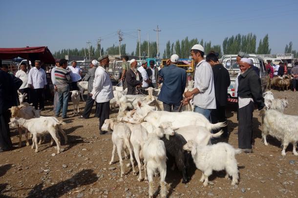 goats-kashgar-livestock-market