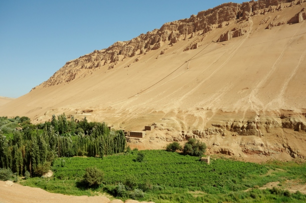 grape-farm-turpan