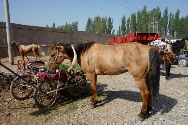 horses-kashgar-livestock-market